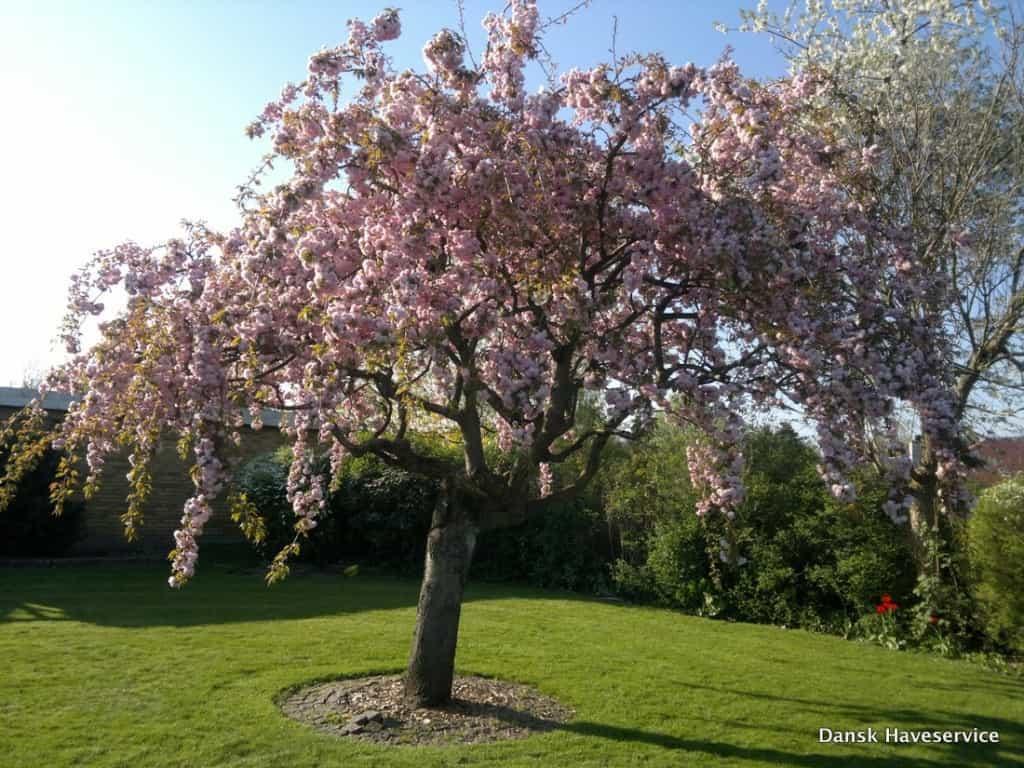 De smukkeste haver fra Dansk Haveservice & Anlægsgartner