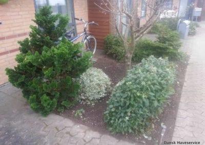 Haveservice-Istandsaettelse-Havebed-Prydbed-Beskaering-Fredericia-Efteraer-2014-kopi
