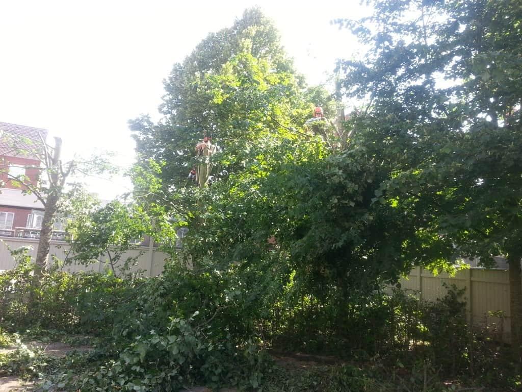 anlægsgartner-beskæring-af-træer-haveservice-træbeskæring-topkapper-anlægsgartner-Svaevende-haek-Kirstine-Seligmanns-Skole-Boernehave-Worsaaesgade-Vejle-sommer-2015-20150714_102234