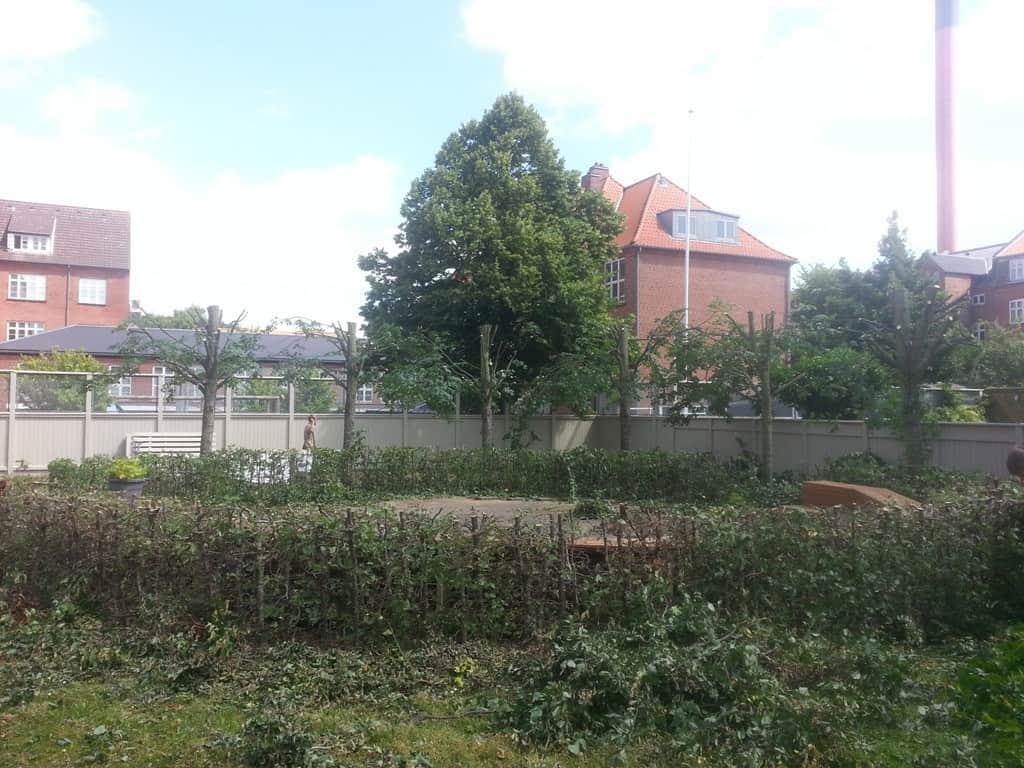 anlægsgartner-beskæring-af-træer-haveservice-træbeskæring-topkapper-anlægsgartner-Svaevende-haek-Kirstine-Seligmanns-Skole-Boernehave-Worsaaesgade-Vejle-sommer-2015-20150714_124506