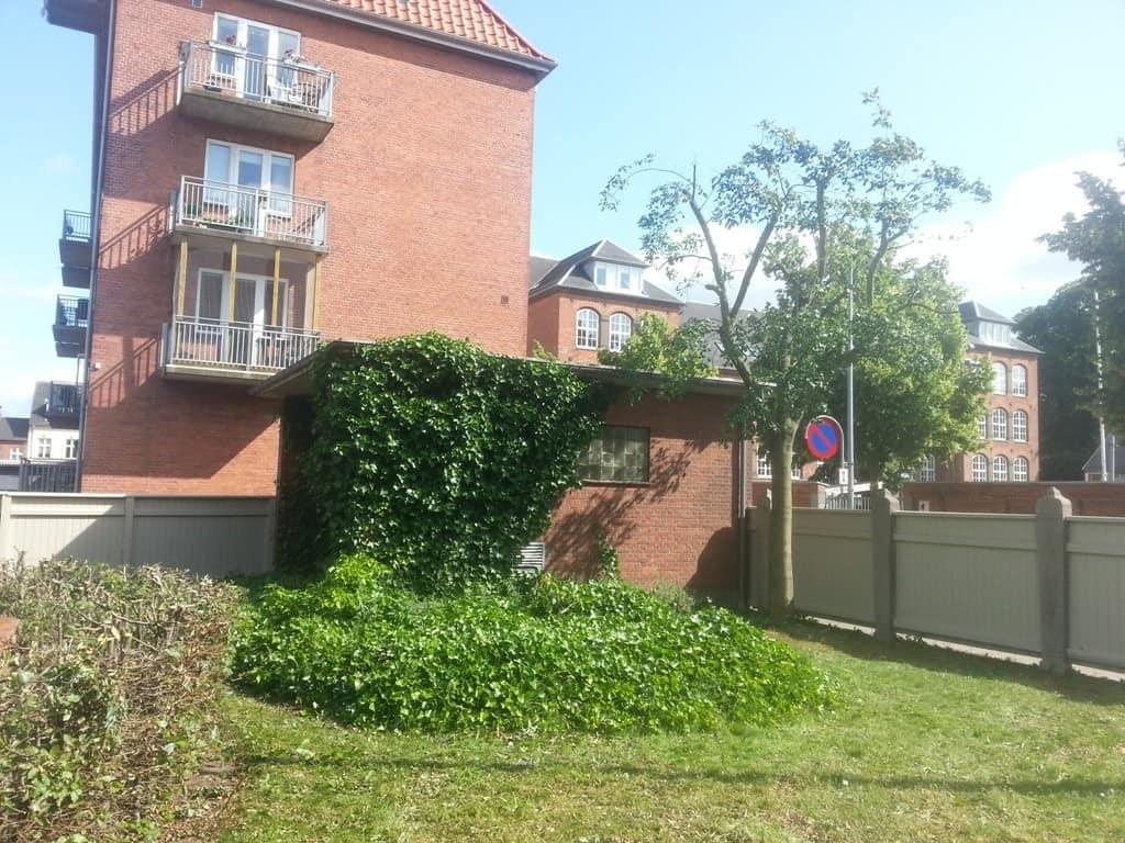 anlægsgartner-beskæring-af-træer-haveservice-træbeskæring-topkapper-anlægsgartner-Svaevende-haek-Kirstine-Seligmanns-Skole-Boernehave-Worsaaesgade-Vejle-sommer-2015-20150714_163743