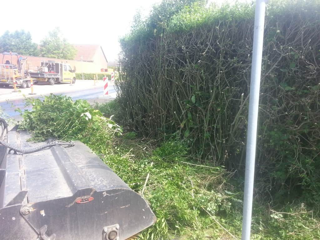 hækklipning-haveservice-Kraftig beskæring af ligusterhæk i Erritsø ved Fredericia