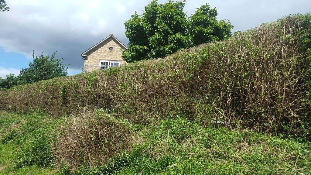 Beskæring af ligusterhæk i Fredericia Klipning og Beskæring af ligusterhæk på Egeskovvej i Fredericia