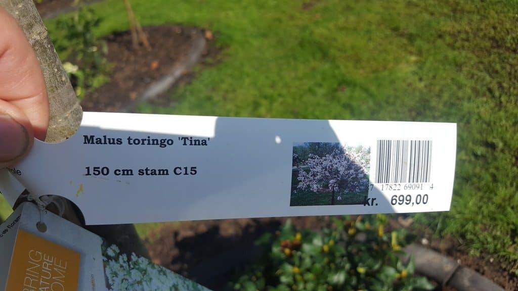 anlægsgartner-haveservice-Moderne dansk have med eksklusivt kantstensdesign i Brejning ved Børkop brejning-boerkop-beplantning-havedesign-malus-toringo-tina-1-20160921_125012