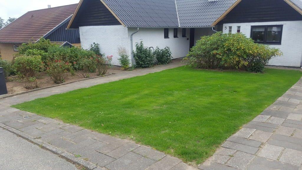 Anlægsgartner-Græsplæne i Vejle nyanlaegning-graesplaene-solbakken-uhrhoej-vejle-20160928_132509