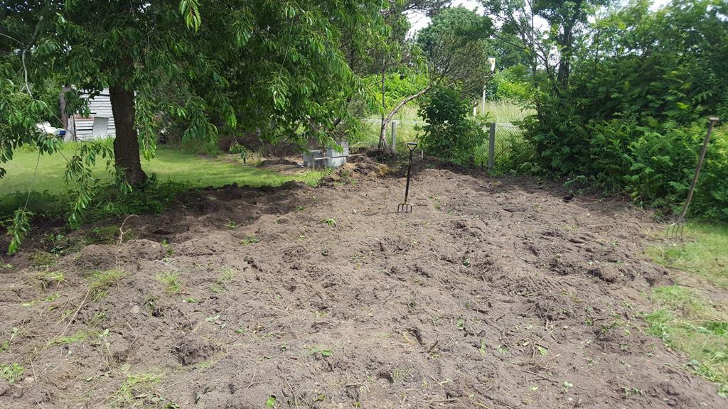 Opgravning af rødder i have mellem Kolding og Vejle