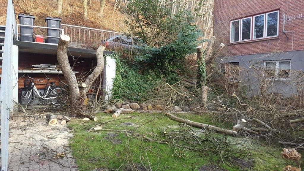 Kraftig nedskæring af fine gamle æbletræer på Skyttehusvejen i Vejle