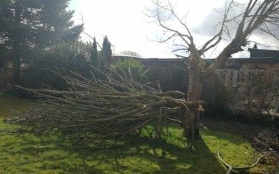 Opskæring og bortskaffelse af stormfældet træ på Rønshovedvej i Mølholm i Vejle
