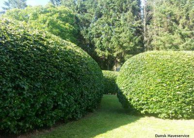 Haveservice-Haekkeklipning-Vejle-Aadal-Egtved-Bredsten-Sommer-2014-001