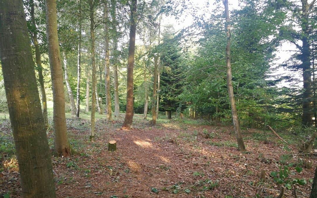 Skovservice i Egtved