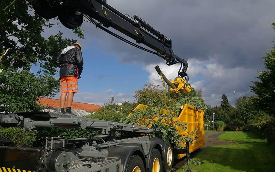 Træfældning af egetræ med kran i Vinding i Vejle