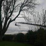 Kranen bevæger sig ud over en mark med det afskårende træ. Som kunden i dette tilfælde slev kan gøre brug af.