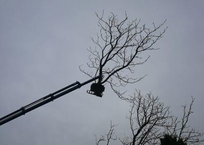 Det er nemt at fornemme de stærke kræfter der er på spil i arbejdet ed at fælde så store træer.