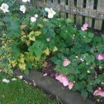 anlaegsgartner-haveservice-blomsterhave-smuk-efteraar-i-en-velanlagt-have-paa-buen-i-boerkop-