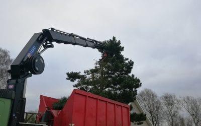Træfældning af fyrretræ med kran i Hornum i Vesthimmerland