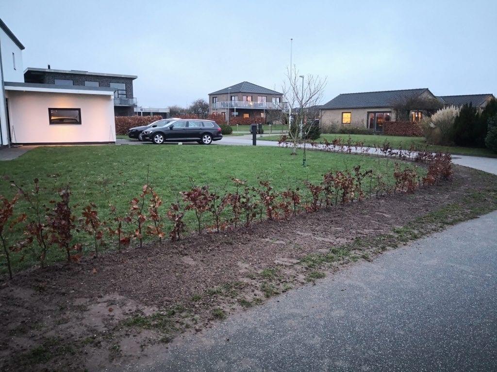Plantning-haek-boegehaek-skaerbaek-fredericia-