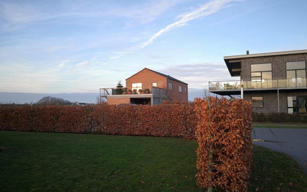 Beskæring af bøgehæk i Skærbæk ved Fredericia