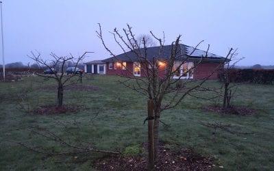 Beskæring af Frugttræer i Vejen – Kirsebær, Pære og Æble – Collectors' Choice