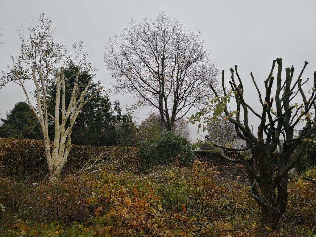 beskaering-traeer-vejen-haveservice-anlaegsgartner-kroneloeft-roed-eg-topkapning-laerk- kronereducerende-beskaering-af-boegetrae
