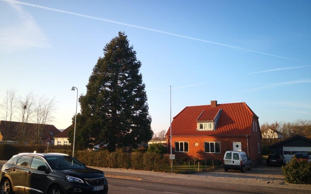 Træfældning i Nørre Bjert ved Kolding